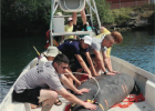 Teen volunteers help tag a manatee for the Marine Animal Rescue Society (MARS) in Broward County in 2013.